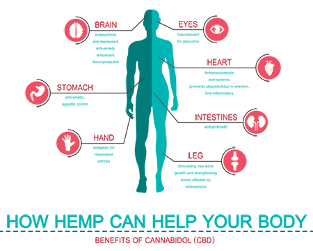 How Does CBD work in the brain and body?