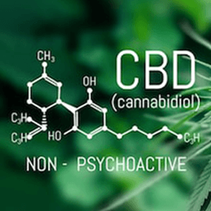 What is CBD ingredients